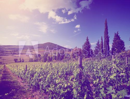Wine Tours 8
