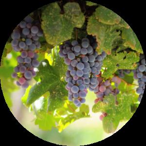 Local Wine Tours